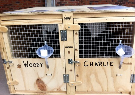 Woody & Charlie - Domestic Cats transport from NZ to San Francisco, USA
