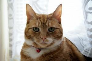Kubi cat transport from NZ to Brunei