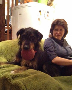 huntaway beardie dog transport from NZ to UK