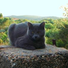 Lluna Cat transport from NZ to Spain