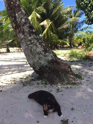 Lucille enjoys climbing the Coconut Trees