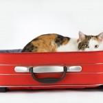 cat travel overseas