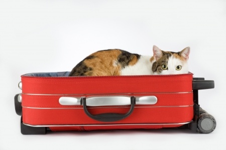 cat travel overseas