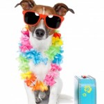 dog travel overseas