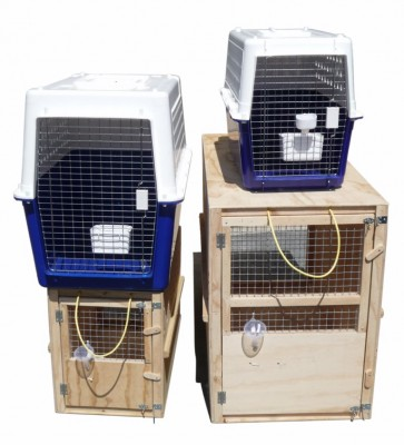 Cage Rental For Pet Transport In New Zealand