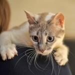 pet transport cat to thailand