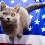 transport cat to usa