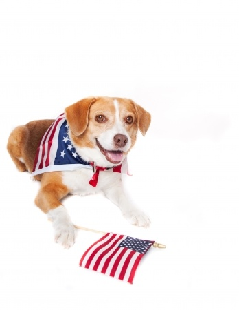 transport dog to usa