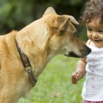 transporting pet dog to malaysia