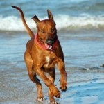 transport a dog to South Africa