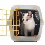 Cat in Transportation Crate