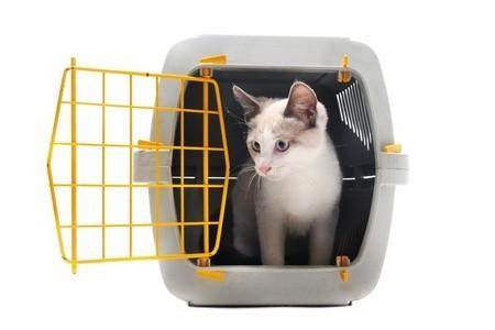 Cat in Transportation Crate