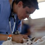 Vet getting ready to check Kitten